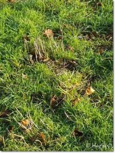 Endlich wieder grünes Gras